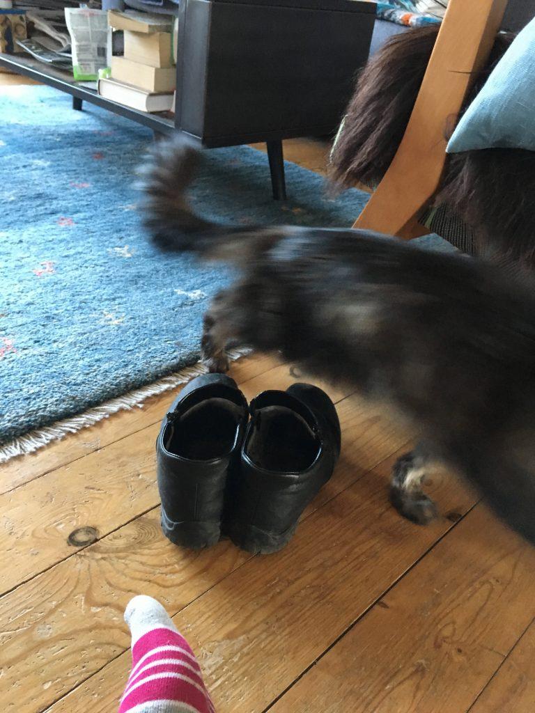 Katte lærer os at kende ved at dufte